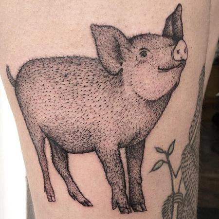 söt griskulting med ruggig borst, tatuering i blackwork stil av Sixten på StaDemonia Tattoo.